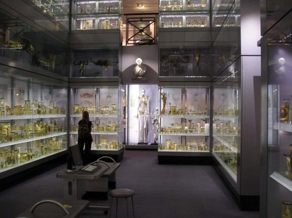ジョン・ハンターが集めた標本を元にしたハンテリアン博物館