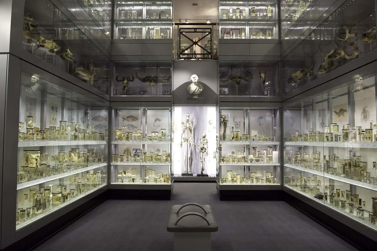 ハンテリアン博物館