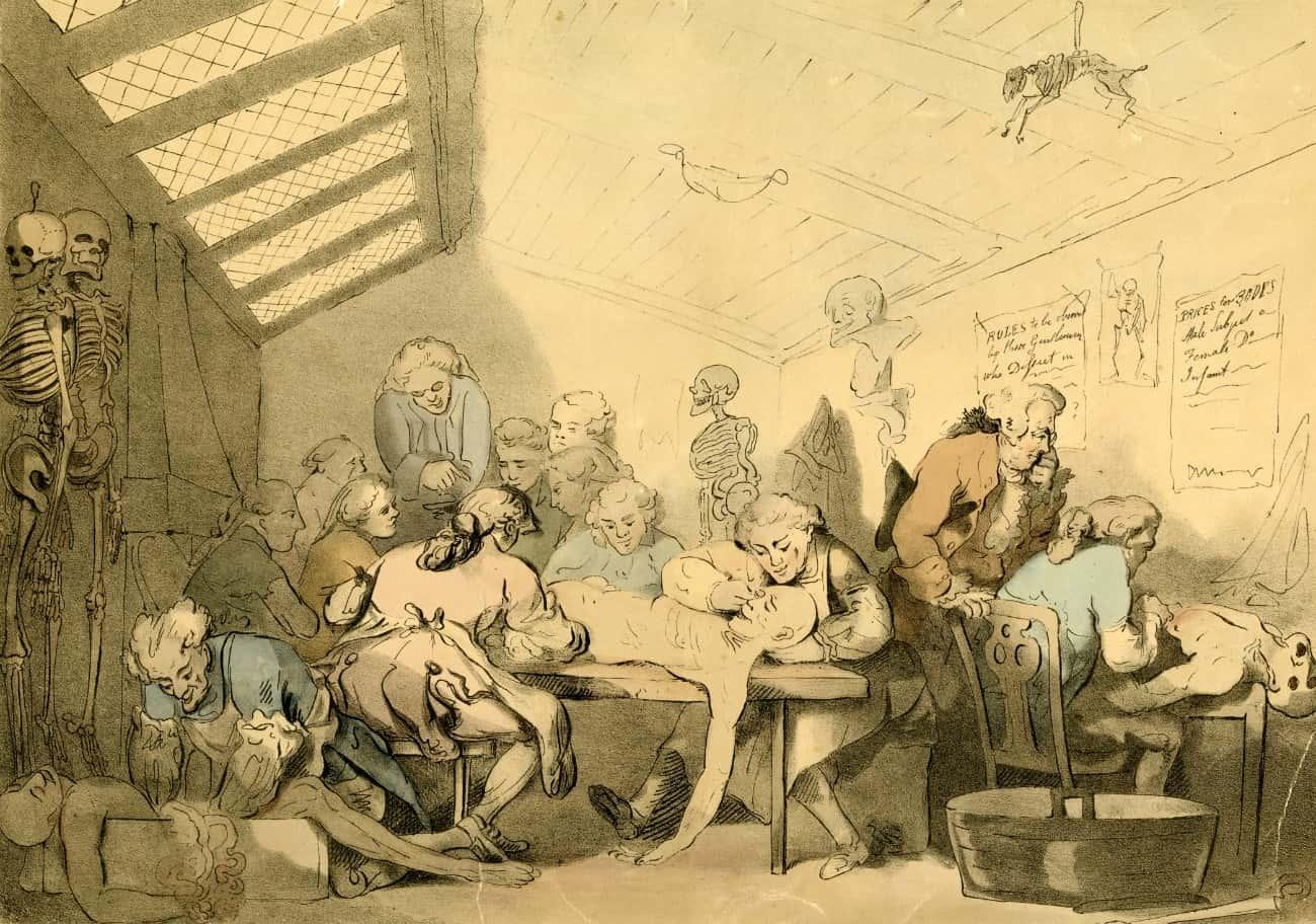 ウィリアムの解剖教室